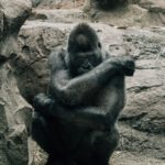 This image has an empty alt attribute; its file name is ape-150x150.jpg