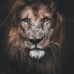 This image has an empty alt attribute; its file name is lion-150x150.jpg